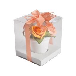 roses en pot 12.5x12.5x14.5cm parf rose cl orange